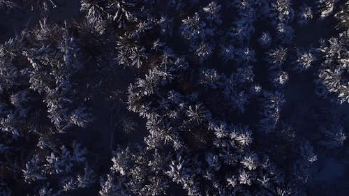 Drone Point of View Winter Forest