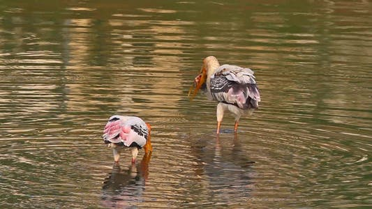 Thumbnail for Fishing Stork 3