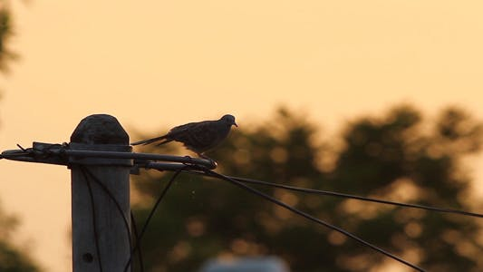 Thumbnail for Bird Preening At Sunrise