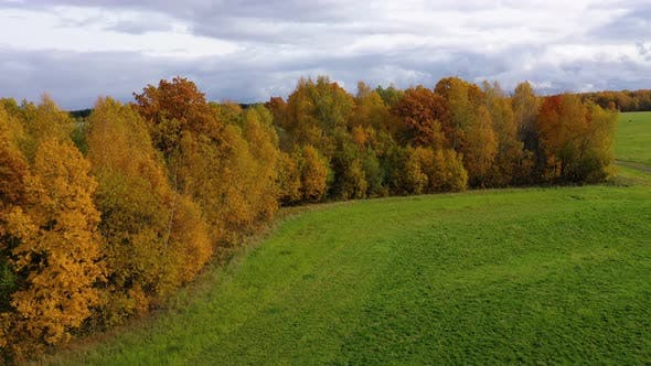 Thumbnail for Autumn Forest and Green Meadow. Trees with Yellow Foliage in Sunny Weather, Top View.