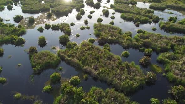 Aerial view wetland in sunlight