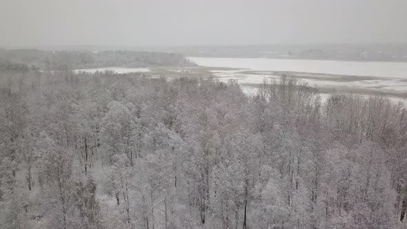 Aerial Quadcopter View of Snowy Forest. Many Trees Covered By Snow.