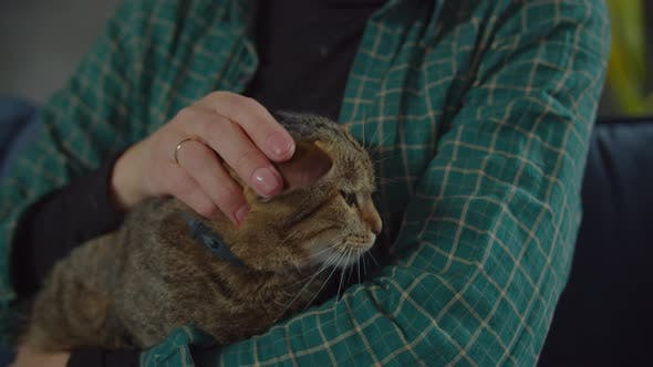 Thumbnail for Adorable Relaxed Tabby Female Cat Purring on Owner Arms