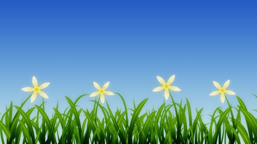 Growing Grass and Flowers