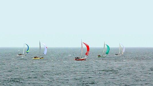 Thumbnail for Yacht Regatta