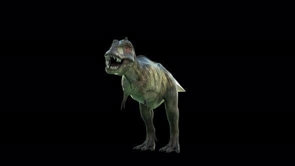 Thumbnail for Tyrannosaurus Vorderansicht