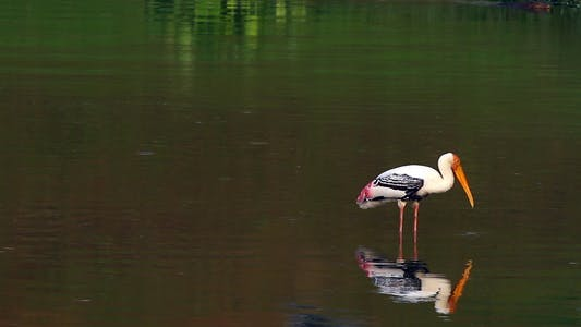Thumbnail for Storks Fishing 2