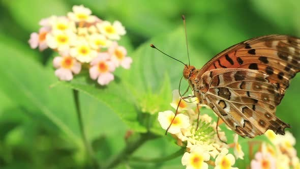 Thumbnail for Butterfly Sitting On A Flower