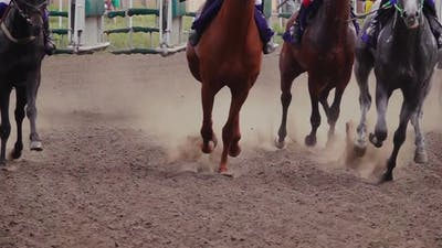 Start of the Horse Racing at the Racetrack