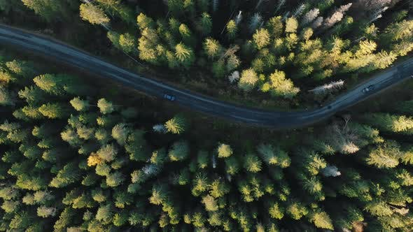 Thumbnail for Automobile Drives Along Empty Road Across Wonderful Forest