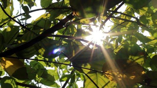 Thumbnail for Sunshine Through Leaves - Slider Shot II
