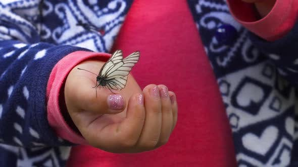 Thumbnail for Butterfly Sitting on the Child Palm