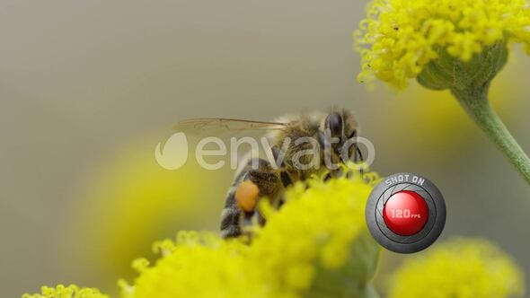 Macro shot of a bee that collecting honey