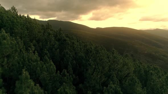 Thumbnail for Bird's Eye View Of Pine Forest on Sunrise