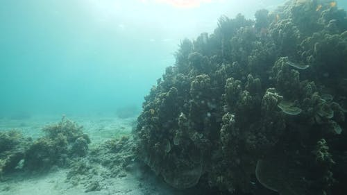 Underwater View of Healthy Coral Reef with Tropical Fishes Swimming Near Corals