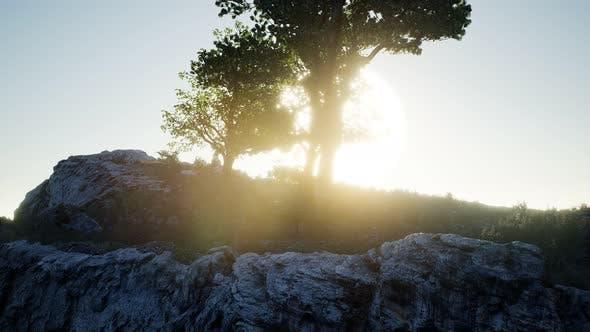Thumbnail for Bäume auf Felsen in Bergen bei Sonnenuntergang