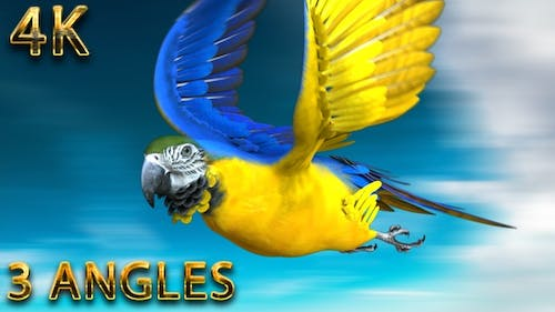 Parrot jumping,flying in the loop and landing from 3 different angles