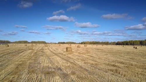 Aerial View Straw Bales Scattered on Stubble Field By Forest