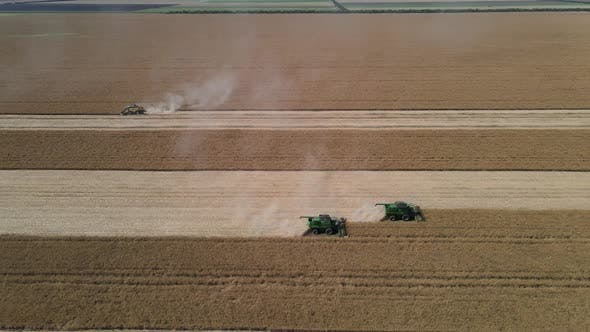 Combine Harvester Harvests Rapeseed In The Field. From A Bird's Eye View