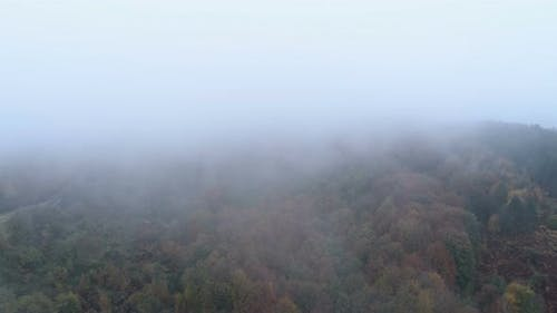 Aerial Drone View of Mist Going Above Tree Tops in the Fall. Autumn Forest with Fog