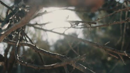 Close up view of dry tree branches with beautiful sun flares