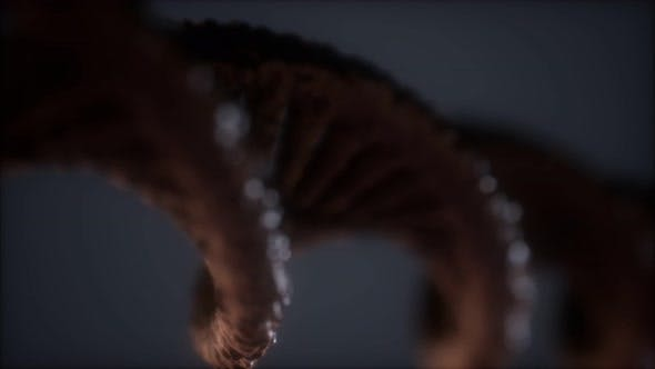 Thumbnail for Structure of the DNA Double Helix