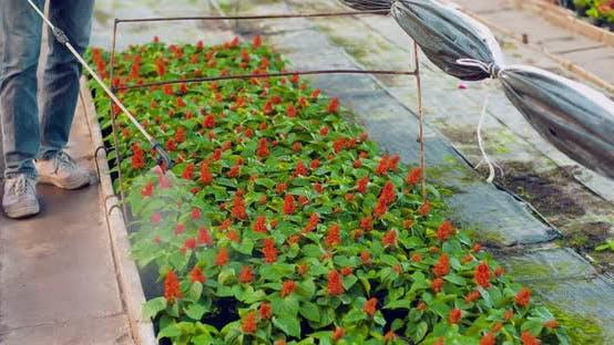 Cover Image for Gardener Watering Flowers on Farm