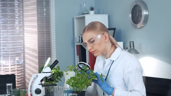 Female Research Scientist Looking on Plant Under Magnifying Glass