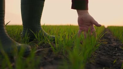 Farmer Hand Slow Motion