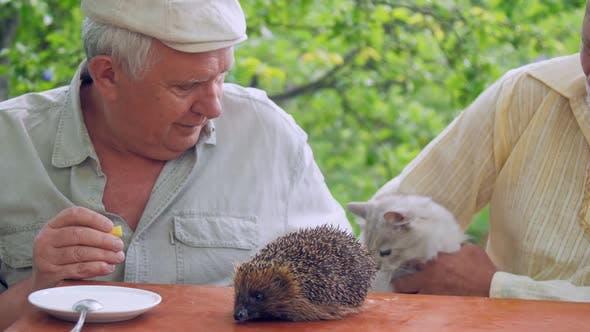 Thumbnail for Senior Citizen spricht mit Igel auf Holztisch und Feeds