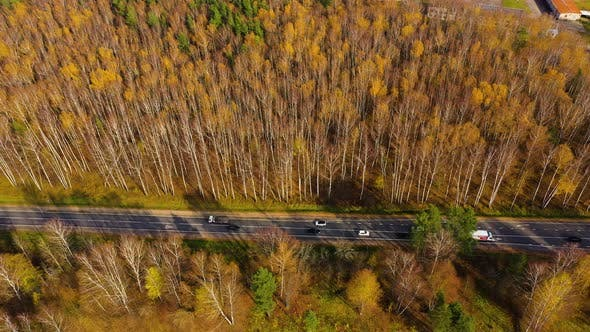 Thumbnail for High Angle View of a Road Trough the Autumn Forest with Copy Space.