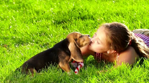 Thumbnail for Beagle Puppy Dog Eating From Hand in Woman's Arms. Slow Motion