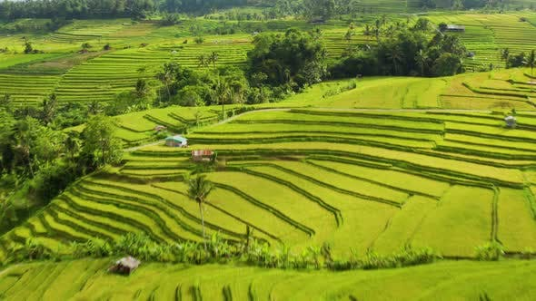Flying Over Terraced Rice Paddies In Bali.
