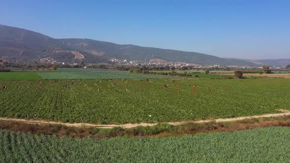 Agriculture Landscape with Mountains in the Background