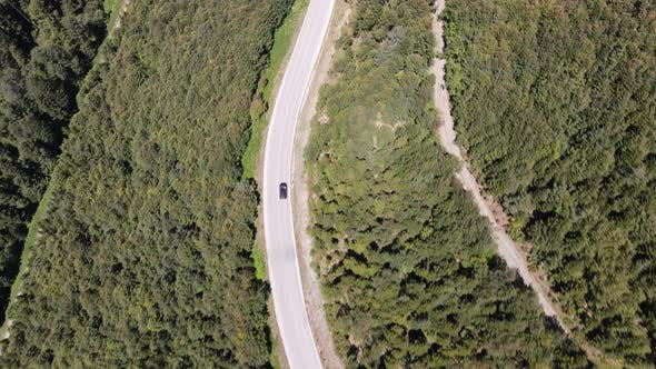 Thumbnail for Asphalt Road with Forest