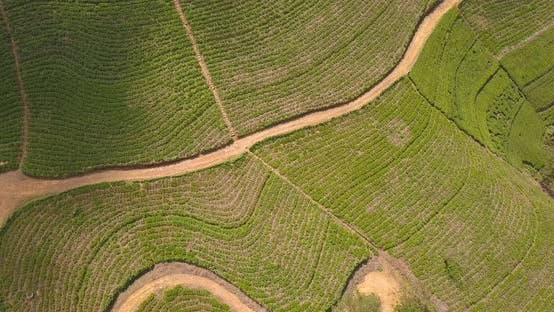 Thumbnail for Aerial View of Hills with Tea Plantation in Morning in Sri Lanka