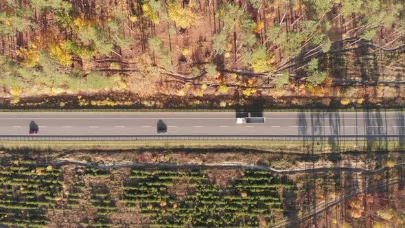 Speedy highway surrounded by fall forest