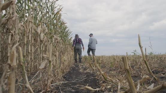 Thumbnail for Unrecognizable Farmers Walking in Corn Field
