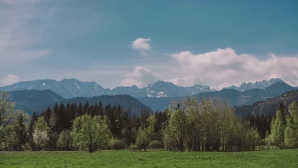 Thumbnail for Summer Landscape Paeceful Valley Trees in the Meadow at Tatra Mountains