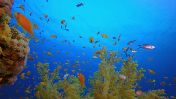 Thumbnail for Tropical Colorful Underwater Seascape