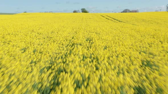 Thumbnail for Breathtaking Footage of Yellow Canola Field on a Sunny Day