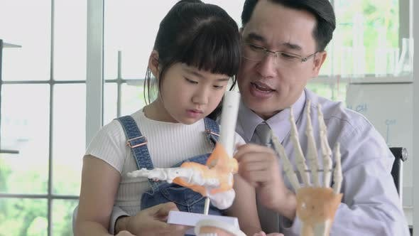 Little girl learning about human structure and skeleton model