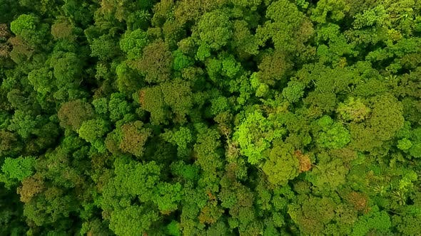 Aerial View of Lush Green Tropical Rain Forest