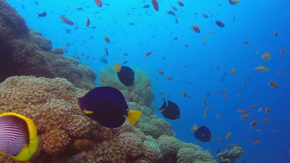 Thumbnail for Tropical Reef with Colorful Fishes