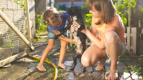 Children In The Yard Outside Are Washing Dog With Water From A Hose