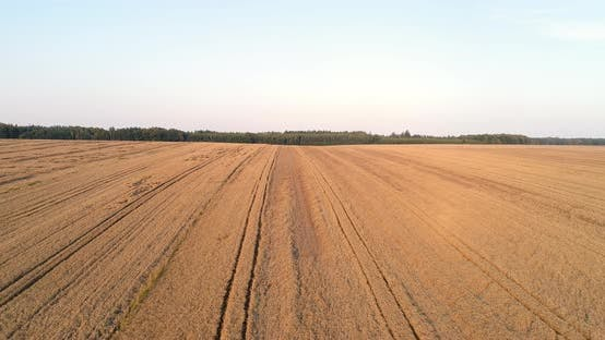 Thumbnail for Flying Over Wheat Field Agriculture