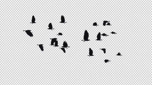 22 schwarze Vögel - Fliegende Transition V