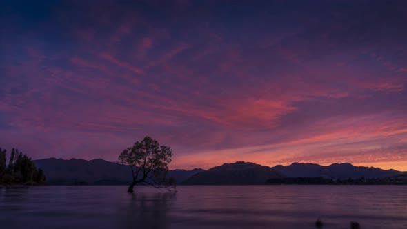 Wanaka Tree New Zealand timelapse