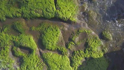 Seaweed on Sea Reef