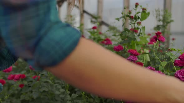Thumbnail for Beautiful Woman Florist Walks Through the Greenhouse with a Tablet Computer Checks the Grown Roses